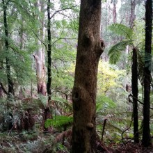 Image of tree trunk and tree fern